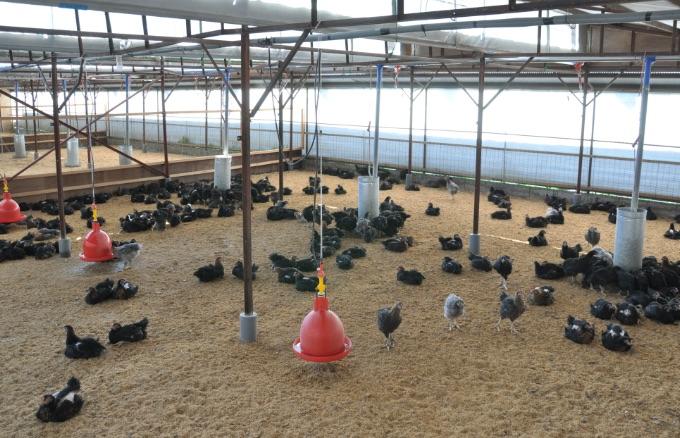 鶏舎スペース